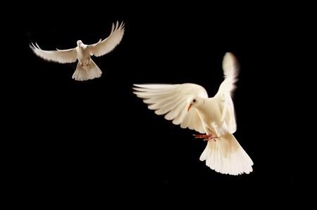 vliegende witte duiven geïsoleerd op zwart Stockfoto