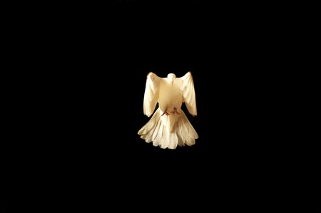 white dove: flying white dove Stock Photo