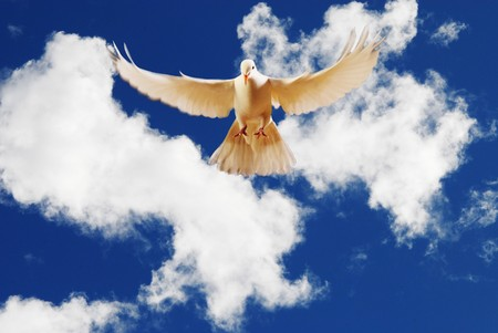 with white: flying white dove Stock Photo