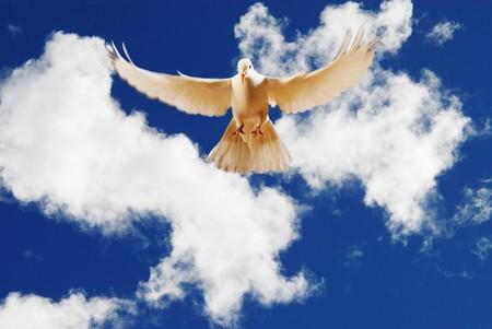 white: flying white dove Stock Photo