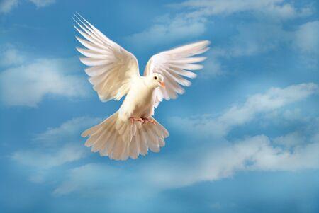 flying white dove Banco de Imagens