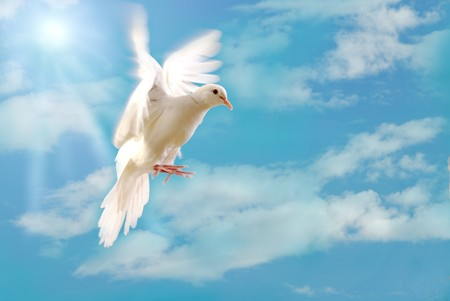 dove of peace: flying white dove Stock Photo