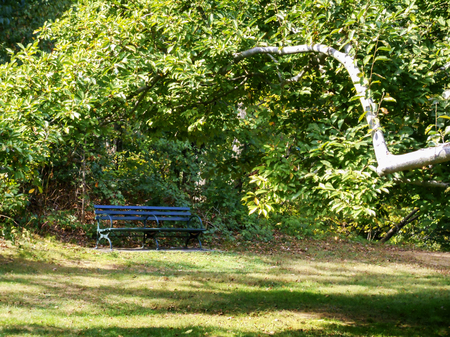 secluded park bench