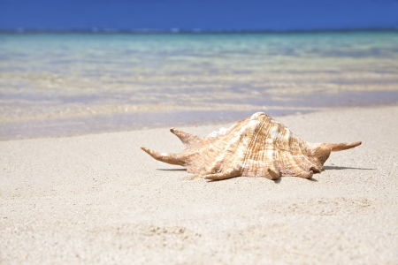 Sea shell at the beach in Belle Mare, Mauritius  Sunny weather Stock Photo - 18482569