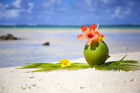 Coconut at the beach of Mauritius  Stock Photo