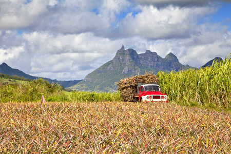 Truck with Sugar cane at Mauritius  In front a pinapple field, background the mountains of the island