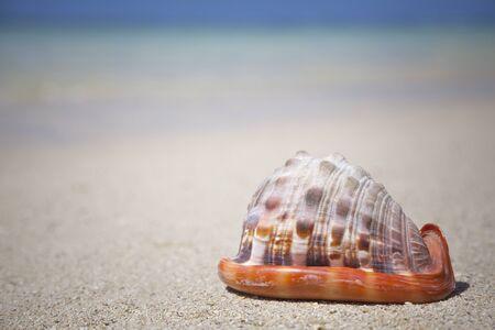 mauritius: seashell at the beach - Mauritius Stock Photo