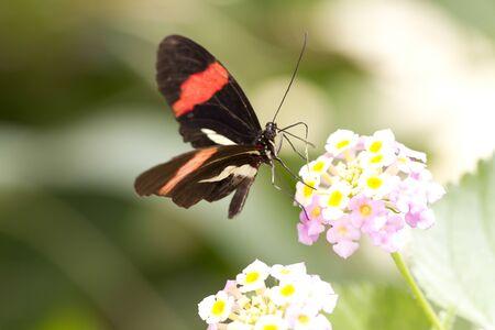 Makro of a butterfly. Daylight