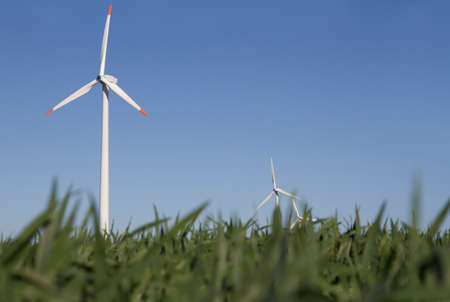 Wind farm on a green field. Worms-eye view. In front gras, background blue sky with wind farm