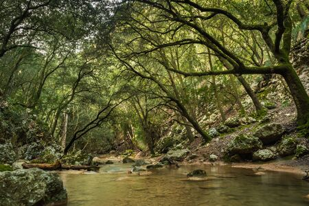 Rapid river running through the stones in an amazing green mediterranean mountain forest with broken trees long exposure