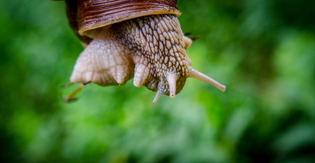Snail slow down to find your way