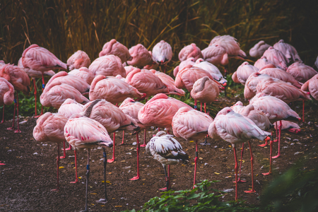 Peaceful relaxed Flamingos Stock Photo