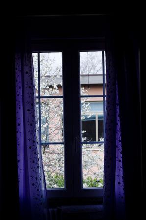 onto: the window onto the world