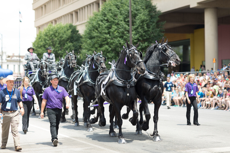 Indianapolis, Indiana, USA - May 26, 2018, A group of black horses pulling a hitch from the company Young Living Essential Oils down the street at the Indy 500 Parade