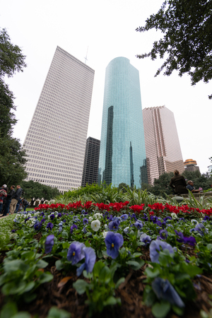 Houston Skyline as seen from Hermann Square with wide-angle lens and flowers on the foreground