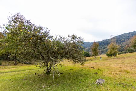 Orange tree in a valley in the mountains at el Cielo, Tamaulipas, Mexico