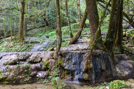 Waterfall in the forrest in the Park known as El Cielo, in the Mexican State of Tamaulipas