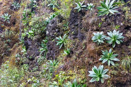 The Vegetation growing on the rocky hills of El Cielo, Tamaulipas, Mexico