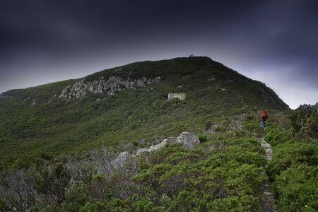 capraia: Capraia Island, Arcipelago Toscano National Park, Tuscany, Italy, trekking trail to the tower of Zenobito and Calarossa among arbutus trees, asfodelie flowers and gulls