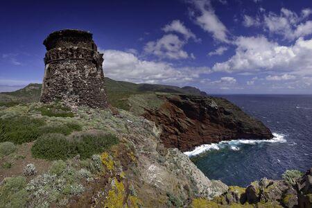 カプライア島、アービュートス木々、asfodelie 花とカモメ Zenobito タワー、Calarossa トスカーネ群島国立公園、トスカーナ、イタリア、トレッキング ト