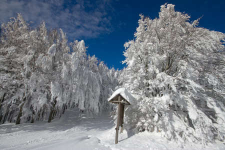 apennines: Italy, Tuscany, National Park of the Casentino Forests, Mount Falterona, Campigna
