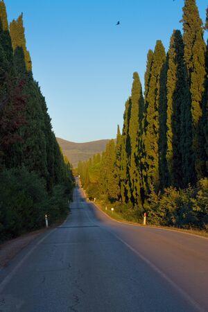 有名なサイプレス アベニュー、ボルゲリの古い町にサン グイドを接続する 5 km の通り 写真素材