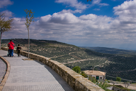 plateresque: Andalusia, Spain, vast expanses of olive trees in the valley opposite the town of Ubeda