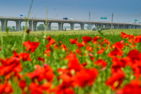 livorno: Motorway from Rosignano Solvay to Livorno, Leghorn, Italy, poppies in a field