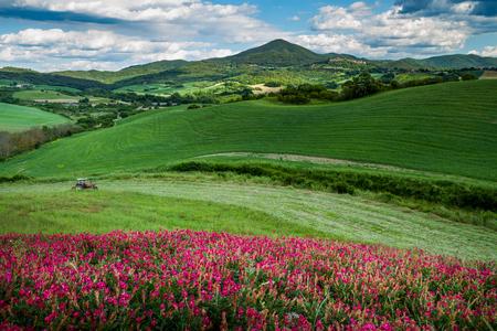 クエルチェート、モンテカティーニ ヴァル ・ ディ ・ チェーチナ、ピサ - イタリア - マラガ フィールドの作物と咲いてアルファルファの春の風景