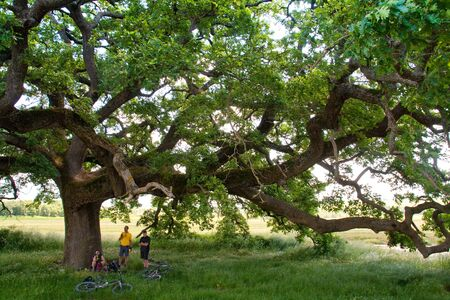 agriturismo: Val dOrcia, Siena, mountain bike excursion in the Tuscan hills - the famous Oak The Checche