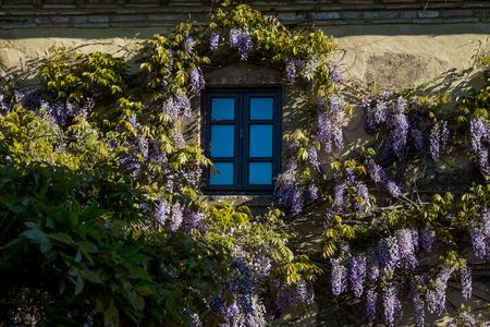 GUARDISTALLO, Pisa, Italy - In the Castle area residences with wisteria, windows