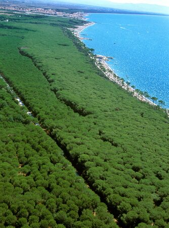 livorno: Marina di Cecina, Livorno, Tuscany - aerial view of pinewood beaches and sea in summer time