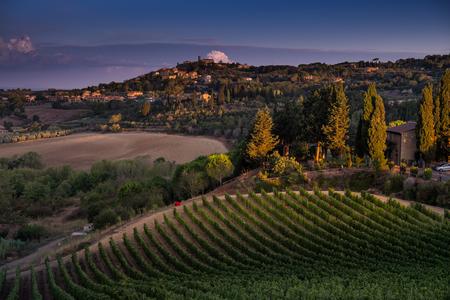 Casale Marittimo, 투 스 카 니, 이탈리아, 첫 번째 새벽 빛에 포도밭을 가로 질러 볼 스톡 콘텐츠