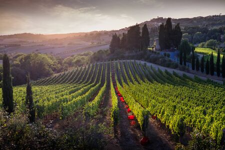 Casale Marittimo, Tuscany, Italy, view across the vineyards on sunset lights 免版税图像