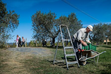 Montescudaio, Pisa, Italy - October 19, 2017 - Hikers walk along the hills rich in vineyards, olive groves, cork oak trees, mushrooms and water courses in the area of Montescudaio province of Pisa in Tuscany