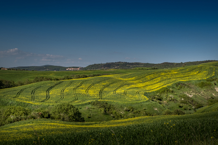 ASCIANO, TUSCANY, Italy - April 25, 2018: trekking, Asciano with ravines, farms in a harsh landscape, arrived in Serre di Rapolano known for the travertine quarries, but from the medieval heart. Landscape with yellow flowers in the Crete Senesi