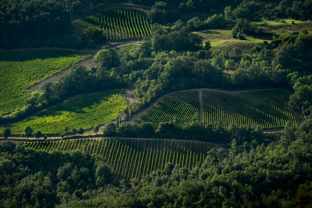 Raccatederighi, Grosseto, Tuscany - fraction of the Italian town of Raccastrada, in the province of Grosseto, in Tuscany, ancient medieval village, panoramic view of the vineyards Stock Photo