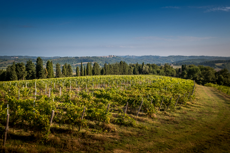 Peccioli, Pisa, Tuscany - Countryside landscape in the valley of Peccioli in the province of Pisa, Italy, processing and care of the vineyards of wine Banco de Imagens