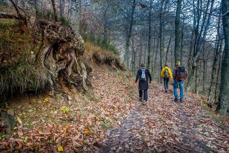 Downhill towards Calcinaia at the foot of the Penna di Lucchio, walking along the Lucchese Apennines, Lucca - Tuscany, Italy 写真素材