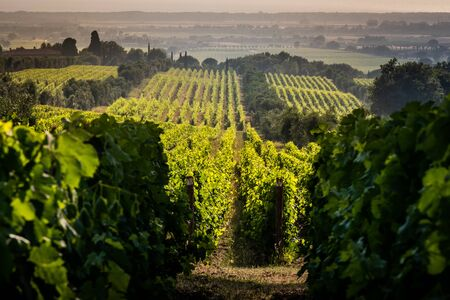 Vineyards between Castagneto Carducci and Bolgheri, red and white high quality DOC wine area. Leghorn, Tuscany - Italy Stock Photo