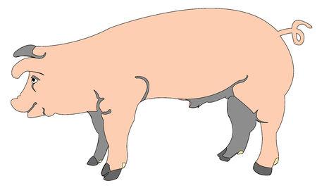 cartoon of a pig, vector art illustration; more cartoons in my gallery Vector