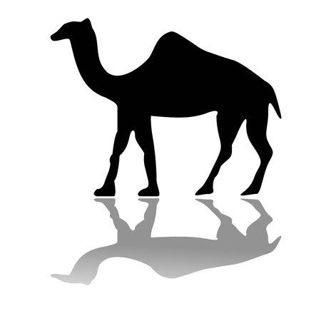 camel izolated on white, vector art illustration Vector