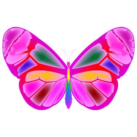 Caricatura de mariposa de dibujo, ilustración de arte vectorial  Ilustración de vector
