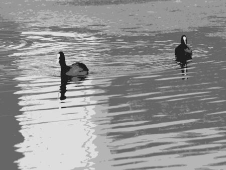 ducks swimming on water,  grayscale composition, abstract art illustration Illustration