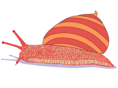 snail cartoon Vector
