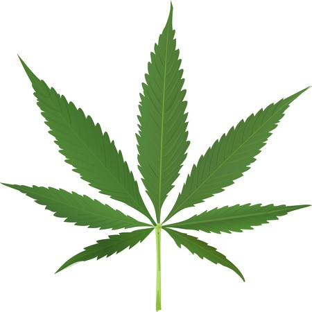addictive: cannabis leaf isolated on white background, abstract art illustration