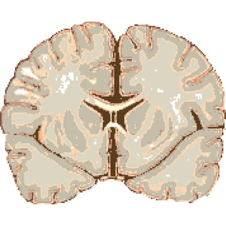 흰색 배경에, 추상 예술 그림을 격리하는 인간의 두뇌