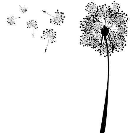 flimsy: dandelion against white background, abstract vector art illustration