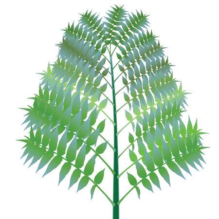 hedge trees: green bush against white background, abstract vector art illustration Illustration
