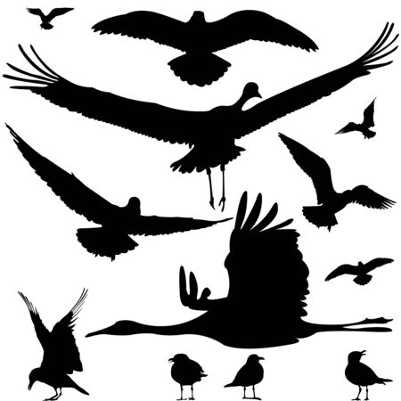 birds silhouettes isolated on white, abstract art illustration illustration